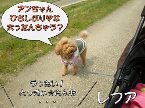 16_20110403223808.jpg