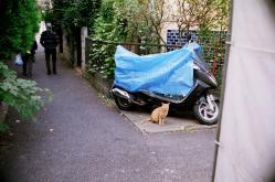cats02.jpg