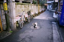 cats03.jpg