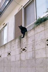 cats05.jpg