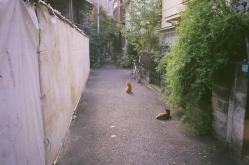 cats07.jpg