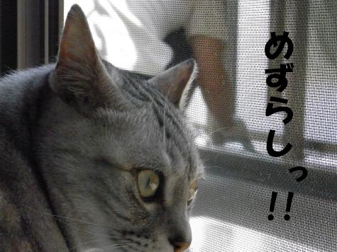 RIMG0706_20100720143359.jpg