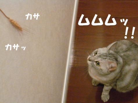 RIMG0721_20100720144102.jpg