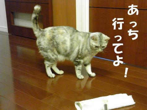 RIMG0743_20100720145908.jpg