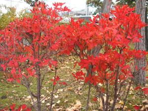 2006.11.28紅葉blog001