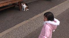 猫との遭遇in鏡山