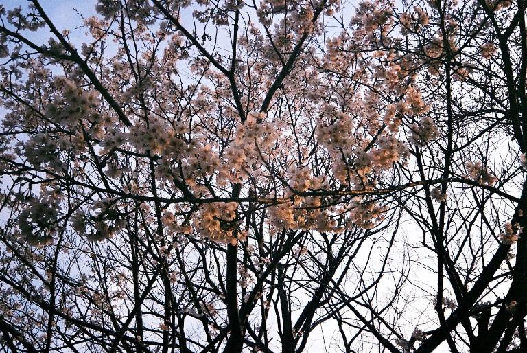 yotuike2012-04-05-38-5