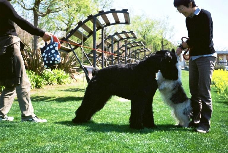 gardenpark2012-04-12-15