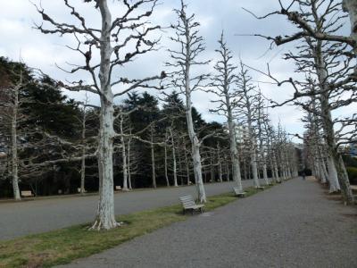 プラタナス並木3
