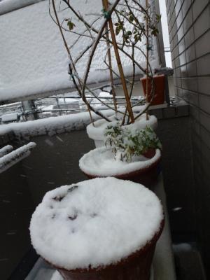 2.29雪2