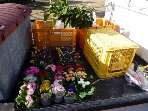 花とパール柑の苗_512