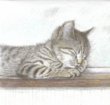 ネコの息ーぶろぐ2