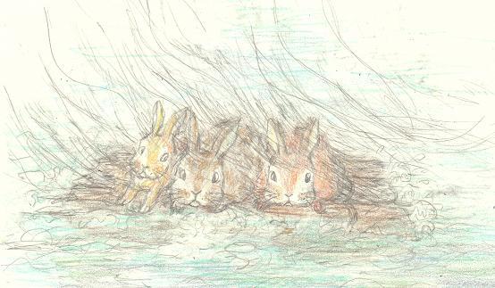 ウサギの冒険―ブログ