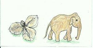 椿の実と象blog