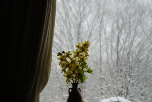 窓から雪15