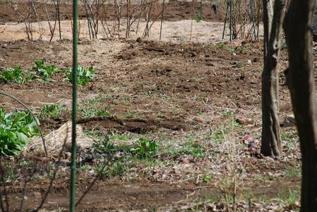 畑・植え付けの準備2