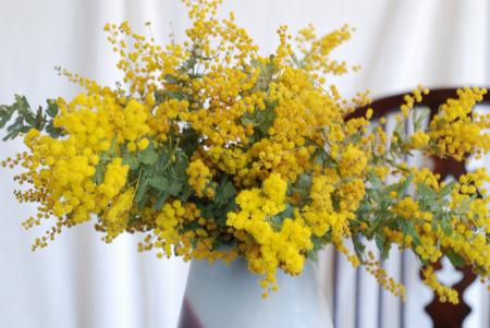 ミモザの花50-450