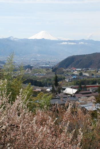 甲府盆地と富士山22