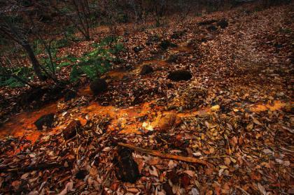石尊山 登山 016 湿地帯01