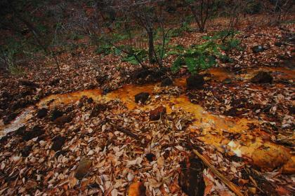 石尊山 登山 017 湿地帯02