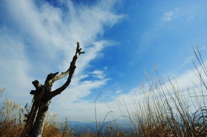 石尊山 登山 021 山頂より 枯れ木01