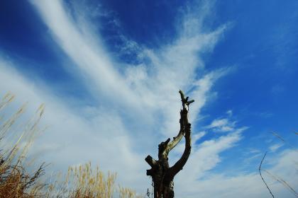 石尊山 登山 022 山頂より 枯れ木02