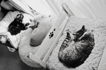 昼寝三兄弟