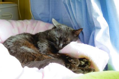 タイガー 昼寝