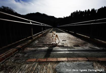 みみ 碓氷湖 橋の上