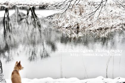 雪の雨宮池とみみ