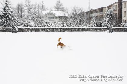 みみ雪遊び01