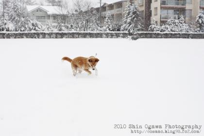 みみ雪遊び02