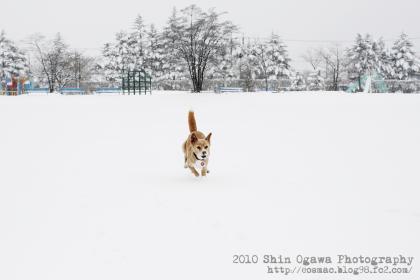 みみ雪遊び03