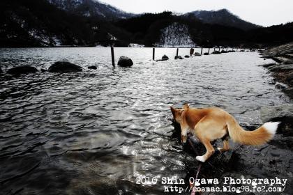 みみ碓氷湖005