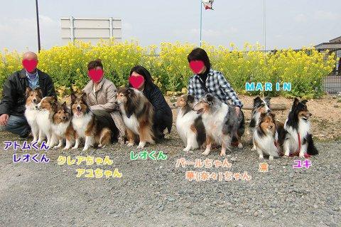 集合写真(5家族、シェル10頭)