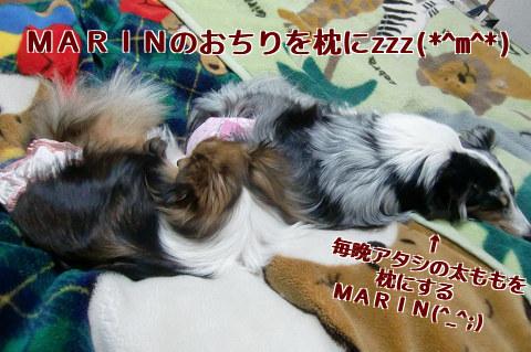 MARINのおちりを枕にzzz(*^m^*)