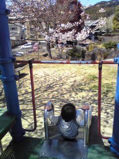 桜を見ながら滑り台