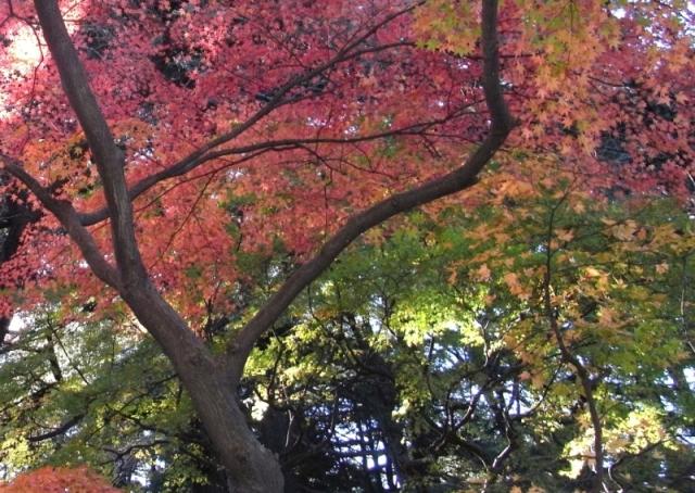 2010.12.11 新宿御苑 モミジ山