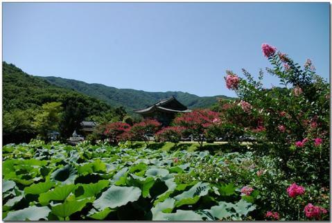 浄土寺と白蓮池