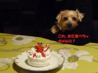 ケーキとレイアちゃん