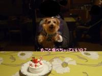 アレサちゃんとケーキ