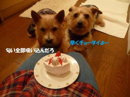 ケーキいただき