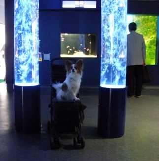 水族館で記念撮影