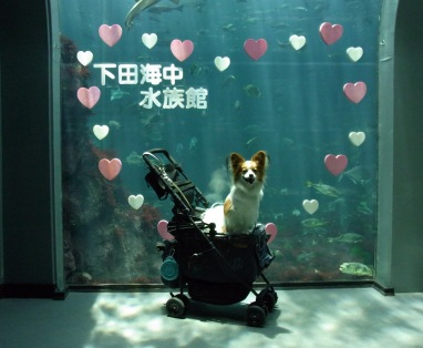 水族館で記念撮影2