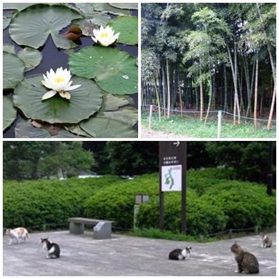 花島公園2