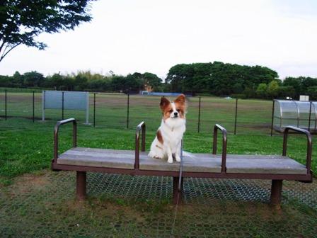 花島公園でラビ2