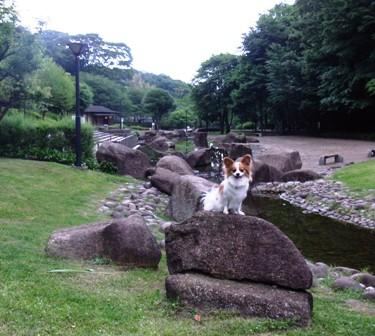 花島公園でラビ1