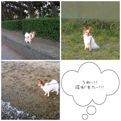 稲毛海浜公園で4
