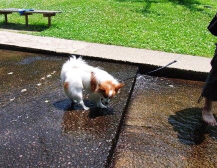 ちょこっとだけ水遊び