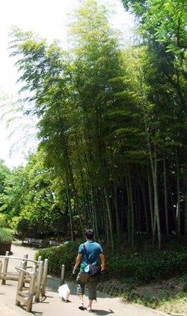 竹林を通って